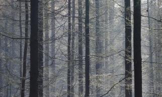 Priddy Woods