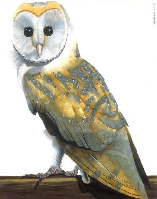 Barn Owl by Rachel Robbins