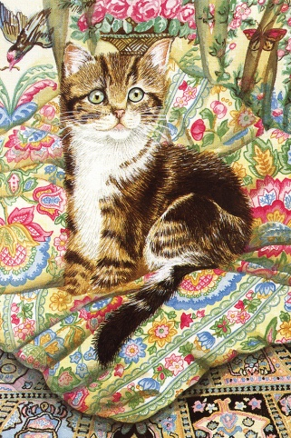 Cat with Cushions