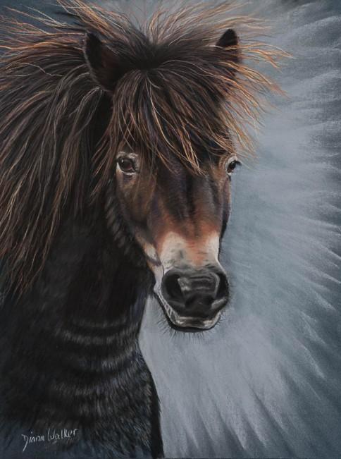 Exmoor Pony - Pastels