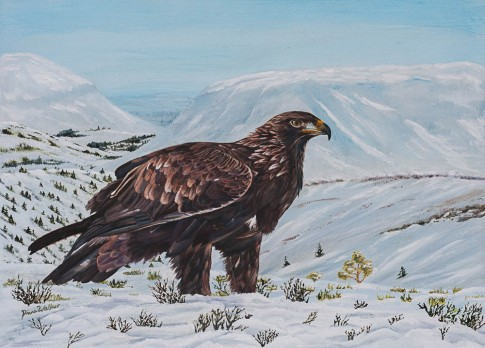 Golden Eagle in Scotland - Acrylics