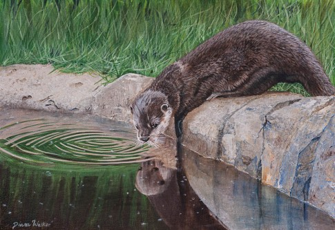 Short Clawed Otter - Acrylics