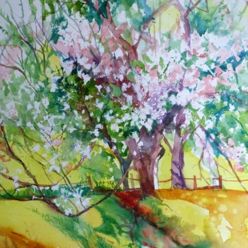 Cherry Trees int